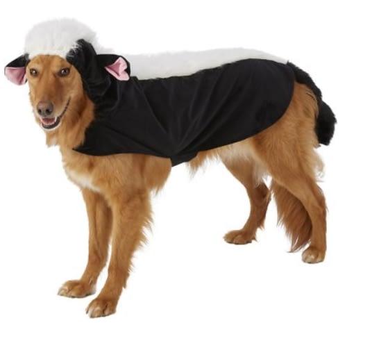 Skunk Dog Halloween Costume