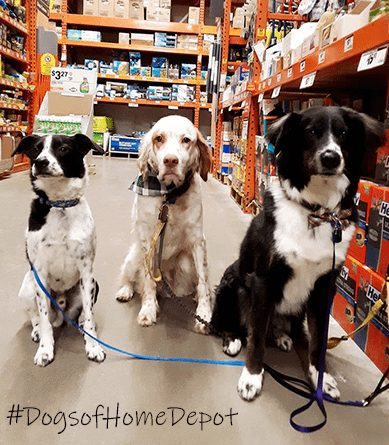 Dogs of Home Depot