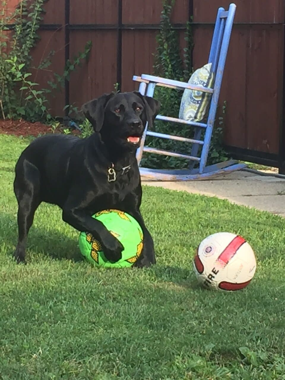 Soccer Balls, One of the Best Balls for Dogs in Action